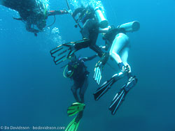 BD-070402-Similan-4020125-Homo-sapiens.-Linnaeus.-1758-[Diver].jpg